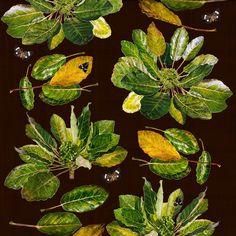 Puka & Magpie Moths (55cm) Magpie, Moth, Watercolor Paintings, Digital Prints, Plant Leaves, Fine Art Prints, Flora, Fingerprints, Water Colors