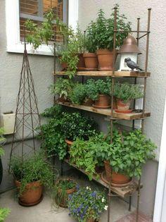 Herbs ~ love the shelf.