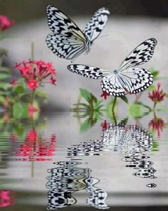 Butterfly Reflections Papillon Butterfly, White Butterfly, Butterfly Wings, Butterfly Flowers, Butterfly Kisses, Mariposa Butterfly, Dragonflies, Ladybugs, Beautiful Birds