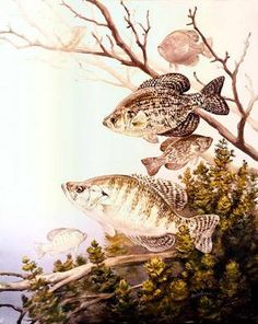 Crappie Chumming is one of the commonly used fishing techniques used to catch crappies. Get to know how to make Crappie Chum. The crappie chum technique is basically about the use of right elements to attract large groups of crappies to your location. Crappie Fishing Tips, Catfish Fishing, Carp Fishing, Best Fishing, Kayak Fishing, Crappie Bait, Fishing Tricks, Fishing Rods, Fishing Tackle