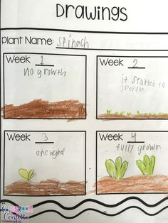 Build a strong classroom community by adding gardening to your weekly routine. Students use garden journals to learn about plant life cycle and social skills. They learn plant life cycle, plant needs, and parts of a plant.