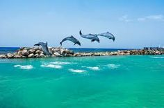 Dolphin Cove in Ocho Rios Jamaica. Awesome experience.
