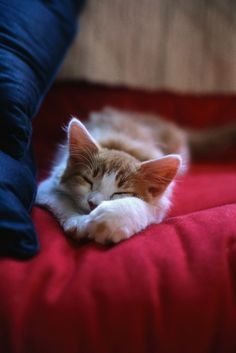What You Should Know About Sick Cat Symptoms? Kitten Love, I Love Cats, Crazy Cats, Sick Cat Symptoms, Baby Animals, Cute Animals, Gatos Cats, Cat Sleeping, Mundo Animal