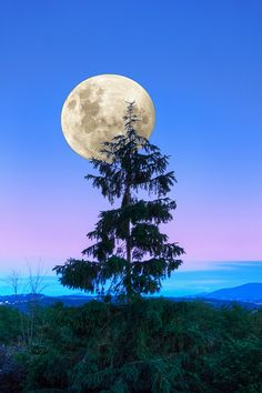 The Moon & Blue Hour Color, Evening in Southen France, by Herman Wong, on 500px.