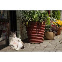 okirakuoki あわてない、あわてない。 ※告知 日本テレビ 朝4時~5時40分から放送している Oha!4 NEWS LIVEのコーナーの1つ 『おはにゃん』の担当の一人になりました。  4月17日~20日を受け持ちます。 猫写真集 ぶさにゃんで使われた写真の撮影前後写真を組み合わせた 物語仕立ての構成で 5時30~40分の間の 30~40秒間放送されます。  17日(月) 41ページのおいでやす。 18日(火) 1ページのほねちゃん 19日(水) 25ページのSato親子のシンクロ。 20日(木) 30ページのセクシーポーズ。  の写真がテーマですので ぜひご覧くださいませ。 ※ 報道番組の特性上、緊急のニュースの差し替えなどにより コーナー自体 放送されないこともございます。 また、テーマが変わってしまうこともございますので  必ず!ではないことご了承くださいませ。 ごめんなさい。  ぼく自身、どのような仕上がりになるのか 全部わかってないので楽しみです。  ありがとうございました。  #cat #ねこ #おはよん  2017/04/12 18:09:52