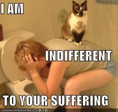 I am indifferent to your suffering.