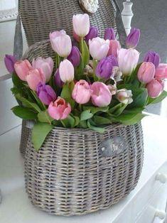 Beautiful combination of tulip colors.