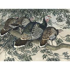 ‡charles frederick tunnicliffe, obe, ra (1901-1979)   Lawrences Auctioneers British Wildlife, Art For Sale, Illustrator, Watercolor, Fine Art, Artist, Animals, Pen And Wash, Watercolor Painting