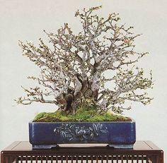 bonsaipots.net - Blue Decorated Pots 2