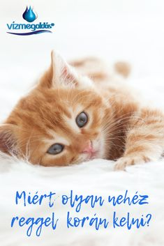 Korn, Cats, Animals, Cutest Animals, Gatos, Animales, Animaux, Animal, Cat