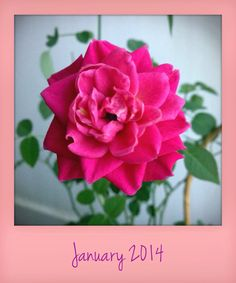 My first flower power shot this 2014!!