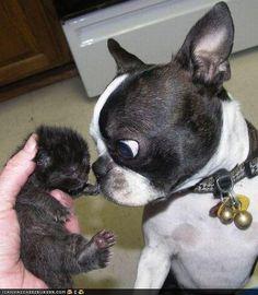 Goggies R Owr Friends: Hao Kan Sumfing Sew Tiny Be Sew Ebil?