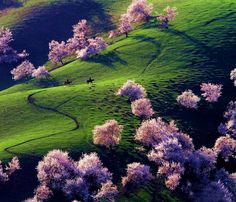 Delightful Apricot Valley in Yili, China