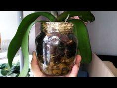 #3 Закрытая система спасает мои орхидеи. Обзор реанимашек спустя месяц. - YouTube