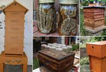 10 DIY Butterfly Feeders That Will Add Beauty And Butterflies To Your Garden Diy Garden Projects, Mosaic Projects, Butterfly Food, Homemade Baby Toys, Educational Baby Toys, Diy Trellis, Diy Rustic Decor, Mosaic Diy, Diy Hanging