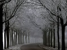 Row of trees leading the way