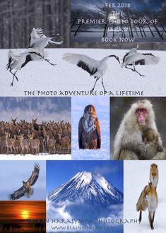 Blain Harasymiw Photography Wildlife photo tours Japan