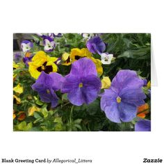 Greeting card, on Zazzle.  Store name: Allegorical_Littera.  Blank for your own message. Suitable for any occasion. A percentage from sales is donated to Multiple Sclerosis (MS) Research. Pansies. Painting. Art.
