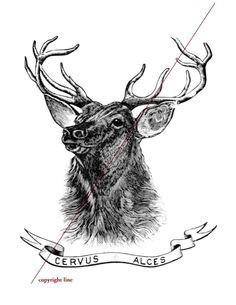 Deer Alces - Temporary tattoo
