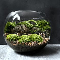 The Bio Bowl Forest Terrarium World Cup consists of crystal clear, high quality glass bowls presenting a miniature landscape of ferns, several varieties of live moss and natural stone & rock architect Mini Terrarium, Succulent Terrarium, Succulents Garden, Asian Terrariums, Woodland Plants, Forest Plants, Indoor Garden, Indoor Plants, Decoration Plante