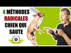 ❌ TON CHIEN TE SAUTE DESSUS OU SUR LES AUTRES ? - YouTube Education Canine, Border Collie, Chihuahua, Labrador, Copyright, Bindi, Dogs, Patience, Poppy