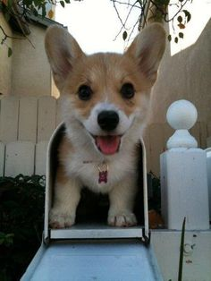 Best mail ever! #HappyAlert via @Happy Hippo Billy