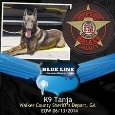 Rest in Peace K9 Officer, Officer Down, Police Officer Shot, Fallen Officer, Cop Dog, Police Dogs, Brave Animals, Police Quotes, Support Police