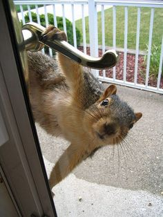 Cute funny squirrel - Hello, Mrs. Piper The birds want me to tell you the feeder's empty.