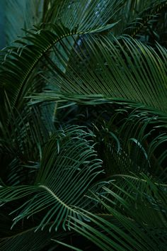 Pin by ria gardiner on wallpapers plant wallpaper, wallpaper, iphone wallpa Phone Backgrounds, Wallpaper Backgrounds, Iphone Wallpapers, Wallpaper Lockscreen, Palette Verte, Plant Wallpaper, Tropical Wallpaper, Green Wallpaper, Leaves Wallpaper