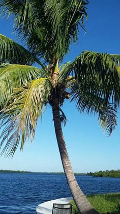 Florida beauty !
