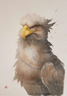 HEAD STUDY - WHITE TAILED SEA EAGLE
