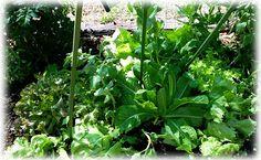 abundant food growing produce in community gardens, organic and safe