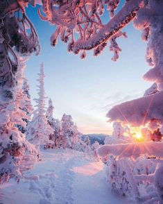 Winter in Finland 😍 which is your favorite? 3 or ❄️ Lapland, Finland. Photos by Winter Scenery, Winter Sunset, All Nature, Winter Beauty, Winter Landscape, Beautiful Sunset, Beautiful Beautiful, Beautiful Scenery, Beautiful Places