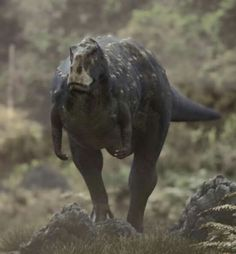 """Rugops (meaning """"wrinkle face"""") is a genus of theropod dinosaur which inhabited what is now Africa approximately 95 million years ago Cenomanian stage of the Late Cretaceous. (BBC-Walking With Dinosaurs)"""