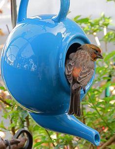 Teapot bird feeder by Darlene McNulty