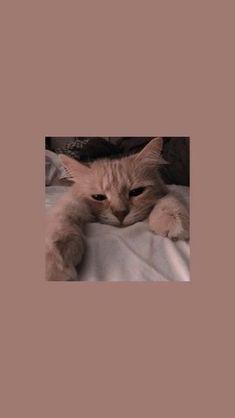 Trendy Wallpaper f r Android 038 iPhone Bildschirm sperren Wallpaper Bildschir. - Trendy Wallpaper f r Android 038 iPhone Bildschirm sperren Wallpaper Bildschirm sperren am Trend - Cartoon Wallpaper, Wallpaper Fur, Cute Cat Wallpaper, Cute Disney Wallpaper, Locked Wallpaper, Trendy Wallpaper, Heart Wallpaper, Kawaii Wallpaper, Girl Wallpaper