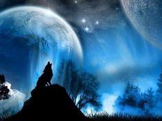 Wolf full hd desktop background wallpaper