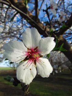 964 Best Flower Bud Blossom Bloom Images Beautiful Flowers
