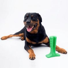 2 in 1 Bristly Dog Toothbrush and Fun Toy colors / 3 sizes). 🐶 Online shopping for Little Dogs Su Best Dog Toys, Best Dogs, Toy 2, Free Dogs, Little Dogs, Dog Supplies, 2 Colours, Cool Toys, 2 In