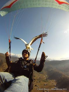 NEPAL! Try parahawking - it is an activity that combines paragliding with falconry. Birds of prey are trained to fly with paragliders, guiding them to thermals for in-flight rewards and performing aerobatic manoeuvres. SO AWESOME! #Nepal #Parahawking