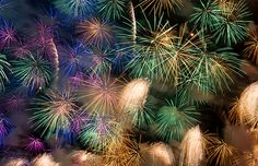 fireworks_vienna New Years Eve, Vienna, Fireworks, Scenery, Europe, Display, Plants, How To Make, Helping People