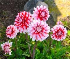 Znalezione obrazy dla zapytania flower garden
