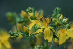 Alternative Medicine, Herb Garden, Health, Plant, Health Care, Herbs Garden, Alternative Health, Salud