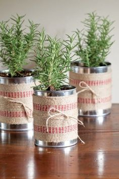 Love the rosemary starts in tins cans!