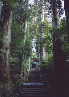 Trip on Hakone | 箱根神社