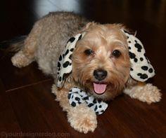 Sadie the Dalmatian - a possible Halloween costume