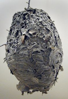 Wasp nest - love them.... i would totally rep them all over my house.. cgilly.com
