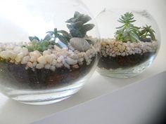 Glass fish bowl and succulents are so pretty with decorative stones, I love this!!