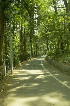 練馬区の上石神井公園|ナイトゥ|note