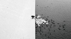 白と黒の世界 | ナショナルジオグラフィック日本版サイト